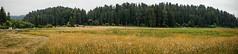 DSC03993 (rocketeerbandit) Tags: nature outdoors hiking redwoods redwoodforest redwoodsnationalpark redwoodsnationalforest