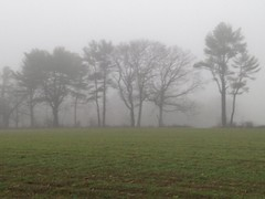 Fogged in Trees (Read2me) Tags: fog farm trees pree she cye hornstrafarms grass thechallengefactory ge challengeclubwinner