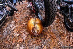Pumpkin Run 00044