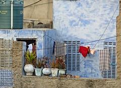 jodhpur 2015 (gerben more) Tags: blue india house plant balcony pots laundry pottery rajasthan jodhpur