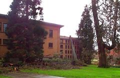 Fenton Tree Fall (Wolfram Burner) Tags: school college oregon campus hall university uo fenton uofo universityoforegon uoregon