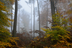 Fort brumeuse (Excalibur67) Tags: autumn trees mist forest automne nikon contemporary sigma arbres brume d7100 vosgesdunord forts 1770f284dcoshsmc