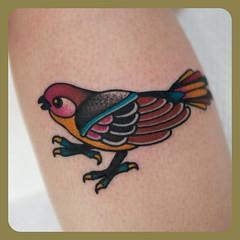 follow my tattooing on Instagram @joshleahytattooer (josh leahy) Tags: tattoo ink traditional brisbane finch sparrow queensland tradition oldskool bold goldcoast mtgravatt newskool tattooer joshleahy rainbowseawolf