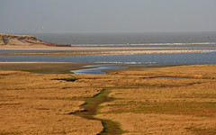 "Natuurgebied ""De Slufter"" @ Texel. #Texel #slufter #natuur #nature #gebied #water #gull #Northsea #waddeneiland #wadden #Justin Sinner #pictures #seascape #landscape #Dune #dunes #eiland #island #isle #clouds #wolken #dutch #holland #netherlands #birds (JustinSinner.nl) Tags: pictures park justin seascape holland nature water netherlands dutch birds clouds landscape island wadden waddeneiland gull dunes dune natuur wolken national northsea else nothing isle parc sinner texel eiland slufter natuurmonumenten natuurgebied staatsbosbeheer nationaal gebied deslufter"