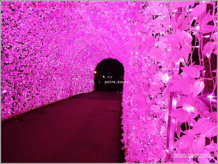 晨靜樹木園 五色星光庭園展 (8).JPG