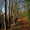 Winter Woods (Michael Foley Photography) Tags: ireland winter house woods clare carton leinster leixlip codublin kelltstown