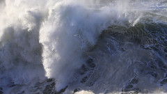 High Surf at the Golden Gate - 6 (fksr) Tags: california bird seagull spray goldengate marincounty marinheadlands breakingwave pointbonita highsurf largewave