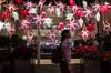 Starry Starry Night (Blue Nozomi) Tags: christmas mall shopping star philippines manila hanging lantern makati decor parol glorietta 2015