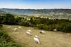 Reise ins Piemont - Wanderung nach Bergolo (hdw2007) Tags: italien italy places it piemonte piemont bergolo