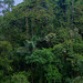Arenal Volcano National Park Rain Forest