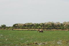 Sri Lanka 2016-79