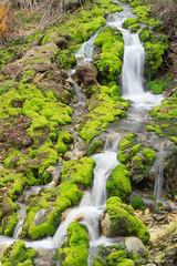 Acid Moss (Hiroyoshi Wada) Tags: moss nature landscape photography acid acidity hotspring green park japan