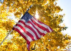New England Foliage (Ian Mackler Photography) Tags: d7200 sigma 1770mm fall foliage leaves outside new england united states america flag sun tree