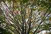 Caumsett State Park-1001966 (Diacritical) Tags: caumsettstatepark exif:aperture=ƒ80 geocity geostate exif:model=leicamtyp240 exif:isospeed=250 geocountry camera:make=leicacameraag geolocation camera:model=leicamtyp240 exif:focallength=35mm exif:make=leicacameraag exif:lens=summiluxm11435asph leicamtyp240 centerweightedaverage summiluxm11435asph ¹⁄₁₂₅secatf80 october292016 40114pm f80 35mm longisland newyork