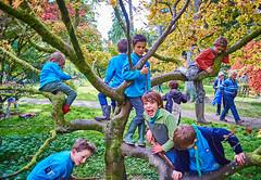 Westonbirt Aboretum 2016 (1st Blagdon Scouts) Tags: westonbirt aboretum autumn trees scouts