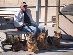 Jersey Shore boardwalk (LennyNJ) Tags: jerseyshore nj newjersey boardwalk germanshepherds dogs oceancounty