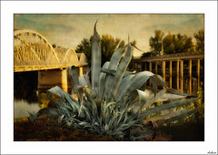 Entre dos puentes (V- strom) Tags: texturas nikon naturaleza nikon2470 puente espinos luz recuerdo flora paisajes