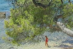A la sombra de su rbol favorito II (Josu Godoy) Tags: arbol arbre tree sea mar mer nia girl gamine playa plage beach