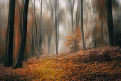 Embrasement (Thomas Vanderheyden) Tags: abstract abstrait arbre brouillard brume colors couleur fog forest foret landscape nature picardie thomasvanderheyden tree red rouge beautifulearth