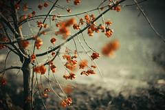 (•:*´¨`*:•.☆Diℓeyℓα ☆•:*´¨`*:•) Tags: blur nature dof 50mmf14 nikon lookslikefilm vsco hungary