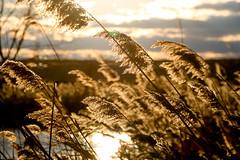 Sunset at Richard W De Korte Park (Yuri Dedulin) Tags: 2016 lyndhurst meadowlands nj nature newjersey outdoor richardwdekortepark statepark sunset weekends yuridedulin