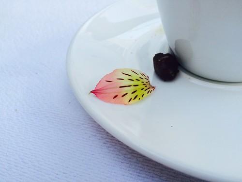 Morning coffee, Casa Oaxaca, November 2016