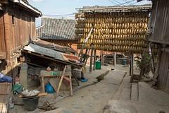 China - Basha Miao village (lukasz.semeniuk) Tags: china bashamiaovillage rice basha