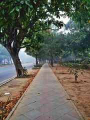Nature's road (harshgogia) Tags: footpath morning trees winters cobble leaves view