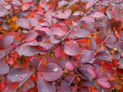 2016-10-25-7238 (vale 83) Tags: autumn nokia n8 friends macrodreams coloursplosion colourartaward autofocus lunaphoto carlzeiss