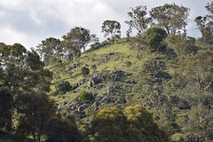 Igneous  outcrops,  Rob Roy Hill, Southern Canberra (AndyBrii) Tags: canberra act australia conder