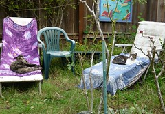 Wiki & Hazel Lounging (Room With A View) Tags: cat hazel cats wiki chairs garden