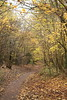 IMG_8903 (Geoff_B) Tags: badockswood bristol walkinthewoods autumn november unprocessed unedited