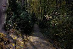 Rima Dadenji, the light here broke my heart — so beautiful, 2016 (Rima Dadenji) Tags: green light forest woods nature environment trees fall autumn ecology permaculture forestry ecoforestry agroforestry rimadadenji fuji fujifilm fujifilmxt10