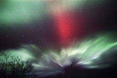 Overhead_36 (film) (northern_nights) Tags: film aurora auroraborealis northernlights colorful corona sky stars tree nikonfm2 nikkor35mmf14 fairbanks alaska 100v10f