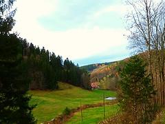 SCHWARZWALD IM HERBST (ehbub@yahoo.de) Tags: schwarzwald herbst tannenbaum laubbaum hang wiese berge teich bach