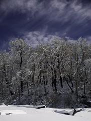 Lago Conguillio (Roberto Cumsille) Tags: chile parque lago nieve viento nubes nacional nevado conguillio araucania congelado melipeuco robertocumsille