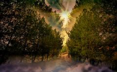 Sunset fog (* landscape photographer *) Tags: light sunset italy tree nature colors fog alberi nikon europe flickr tramonto sigma valle natura valley sa sasi nebbia 1020 colori luce paesaggio aria colline salvo lucania 2015 respiro argilla creazione creste dagri landscapephotographer montalbanojonico salvyitaly