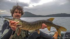 loch Lomond pike (Nicolas Valentin) Tags: uk fishing pike lomond lochlomond ukscotland esox kayakfishing nicolasvalentin kayakfishingscotland lomondpike ecossepeche