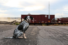 Boxcars and Dogs. (Urban Camper.) Tags: urban dog dogs minnesota portraits photography steel minneapolis trains boxcar minneapolisdogs dogsofminneapolis