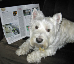 """11/12A ~ """"Riley in More of Our Canada magazine"""" (ellenc995) Tags: riley westie november westhighlandwhiteterrier 12monthsfordogs15 magazine moreofourcanada coth thesunshinegroup supershot fantasticnature alittlebeauty abigfave coth5 sunrays5 challengeclub pet100 pet500 pet1000 pet1500 thegalaxy 100commentgroup"""