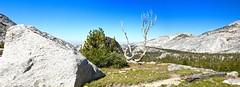 Yosemite Valley from Vogelsang (Lost in Flickrama) Tags: yosemite nationalpark vogelsang mountains peaks granite rocks valleys pine trees highsierra