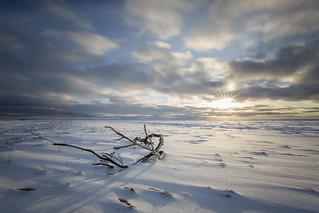 Winter came to the seashore