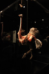 Science World - October 15, 2015 (rieserrano) Tags: ostrich bodyworlds plastination