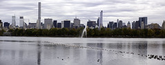 Jacqueline Kennedy Onassis Reservoir III (Joe Josephs: 2,861,655 views - thank you) Tags: nyc newyorkcity newyork skyline centralpark manhattan fine photojournalism panoramas centralparknewyork urbanlandscapes fineartphotography landscapephotography newyorkcityskyline urbanparks jacquelinekennedyonassisreservoir fineartprints nikond810 joejosephs joejosephsphotography joejosephs2015