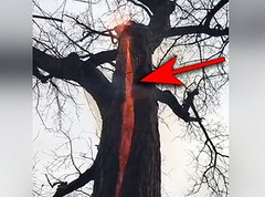 They Were Walking Through The Woods And Noticed Something Very Bizarre In This Tree (viralworldnews) Tags: tree fire forestfire treeonfire