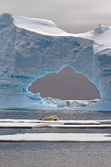 Vertical Look #1 - Crabeater Seal and Ice Arch (jpmckenna - Denali Bound) Tags: ice arch antarctica seal iceberg crabeaterseal petermannisland lobodoncarcinophagus lobodoncarcinophaga