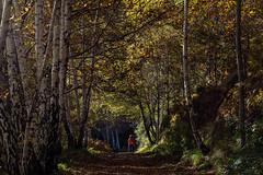 Autumn (Luigi Rossini) Tags: colori colors autunno autumn landescape walking traking garfagnana italy tuscany campo catino eremo foglie camminare passeggiata montagna montain