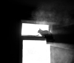 In The Morning ... (Sorin B. VHS) Tags: blackwhite cat kitten cute window sun gazing sunrise rays dust pose room open