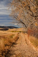 On The Right Path (catmccray) Tags: colorado hildebrandranchpark openspace fall autumn dirtroad foothills