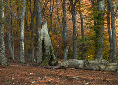 500px Photo ID: 179732377 (Francesco Ganzetti) Tags: autumn yellow park trees leaves red forest beauty nature light bokeh beautiful fall leaf green woods moody atmosphere focus botanical woodland samyang 135mm olympus brenizer